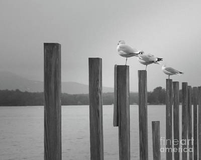 Photograph - 4 Gulls by Mim White