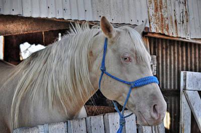 Horse Art Print by Savannah Gibbs