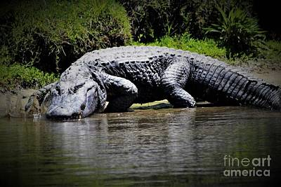 Huge Alligator Art Print by Paulette Thomas