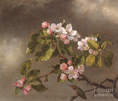 Pink Flower Branch Painting - Hummingbird And Apple Blossoms by Martin Johnson Heade