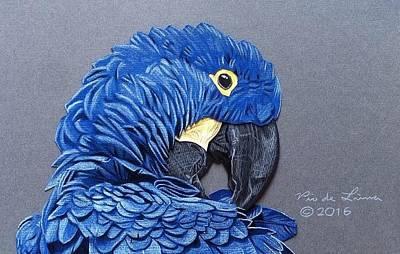 Macaw Drawing - Hyacinth Macaw by Pio De Lima