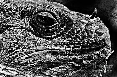 Photograph - Iguana Lizard by Jim Corwin