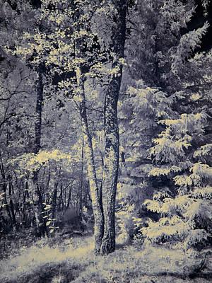 Photograph - IIn Roytta Infrared by Jouko Lehto