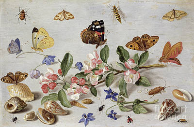 Beetle Painting - Insects by Jan Van Kessel