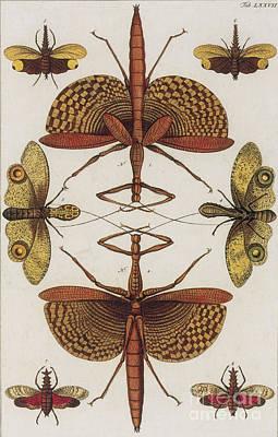 Insects, Sebas Thesaurus, 1734 Art Print