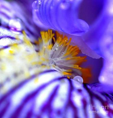 Photograph - Iris by Sylvie Leandre