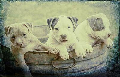 Watercolor Pet Portraits Photograph - It's Bath Time by Robert Kinser