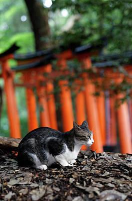 Photograph - Kyoto by David Harding