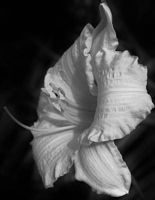 Photograph - Lily In Black And White by Bruce Bley
