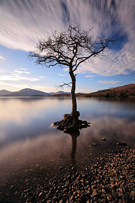 Loch Lomond Tree Art Print by Grant Glendinning