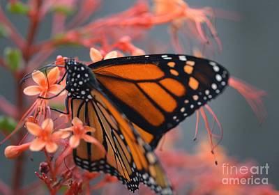 Photograph - Monarch Butterfly by Janice Spivey
