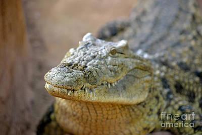 Zoological Photograph - Nile Crocodile by George Atsametakis