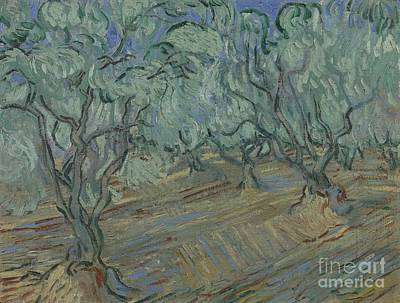Painting - Olive Grove by Celestial Images