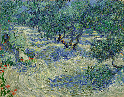 Painting - Olive Orchard by Vincent Van Gogh