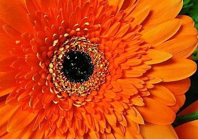 Photograph - Orange Delight by Bruce Bley