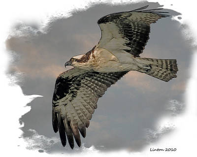 Hawk Digital Art - Osprey Flight by Larry Linton