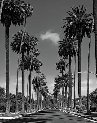 Beverly Hills Wall Art - Photograph - Palms Of Beverly Hills by Mountain Dreams