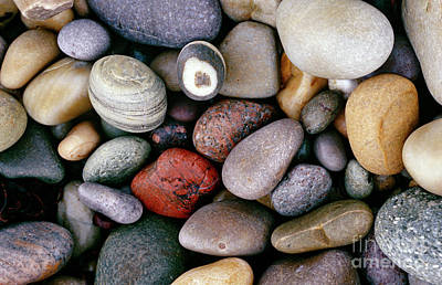 Different Colours Photograph - Pebbles by American School