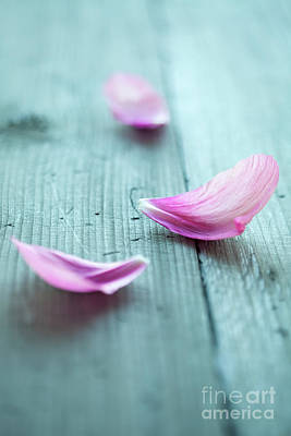 Photograph - Peony Petals by Kati Finell