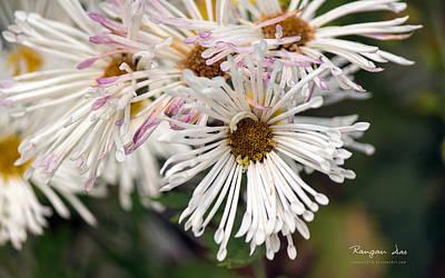 Floral Digital Art - Plant by Super Lovely