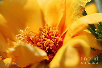Digital Art - Portulaca Named Sundial Gold by J McCombie