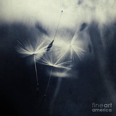 Whispers In The Dark 5 Art Print by Priska Wettstein