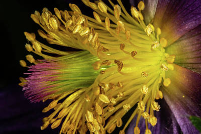 Photograph - Purple And Yellow by Jay Stockhaus