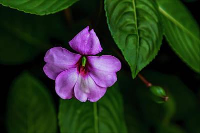 Photograph - Purple Flower by Robert Ullmann