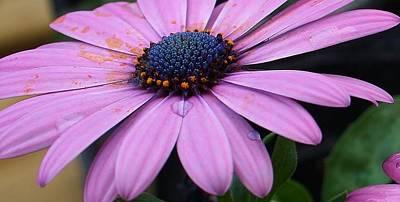 Photograph - Purple Majesty by Bruce Bley