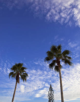 Minimalist Movie Quotes - Queen Palms with Cirrocumulus Clouds on a Tropic Evening by Allan  Hughes