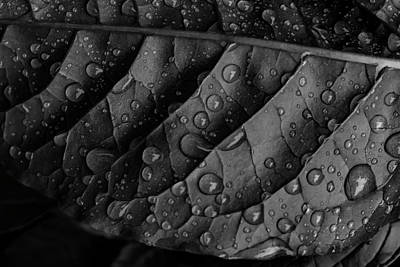 Photograph - Raindrops And Leaf by Robert Ullmann