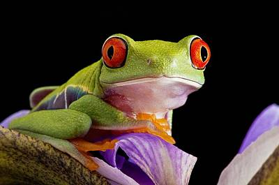 Red-eyed Tree Frog Art Print by Linda Wright