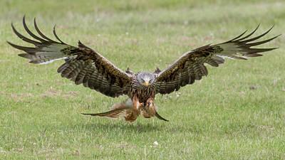 Kites Photograph - Red Kite by Ian Hufton
