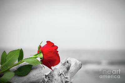 Photograph - Red Rose On The Beach. Color Against Black And White. Love, Romance, Melancholy Concepts by Michal Bednarek