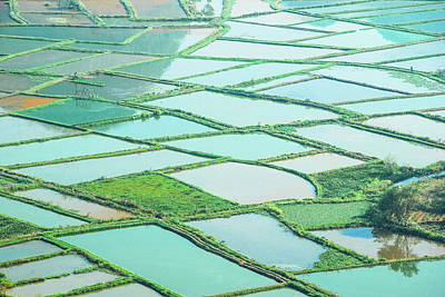 Photograph - Rice Fields Scenery by Carl Ning