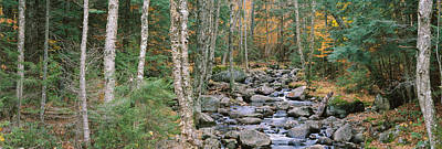 Black River Photograph - River Flowing Through A Forest by Panoramic Images
