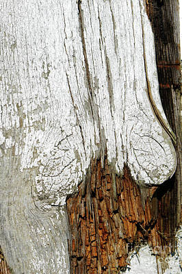 Photograph - Rotting Wood by Tom Gowanlock
