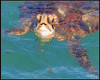 Green Sea Turtle Photograph - Sea Turtle  by W Gilroy