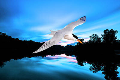 Photograph - Seagull Flying In Action by Fernando Cruz