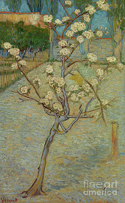 Painting - Small Pear Tree In Blossom by Vincent Van Gogh