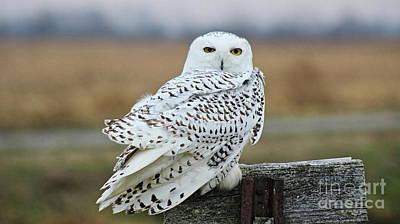 Photograph - Snow Owl by Erick Schmidt