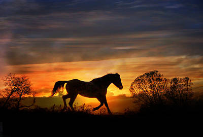 Wild Mustang Photograph - Southwestern Color by Stephanie Laird