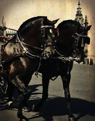 Photograph - Spanish Horses by JAMART Photography