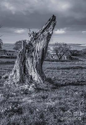 England Photograph - Stanton Moor by Carol Herbert