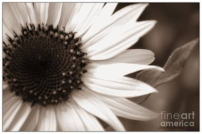 Photograph - Sunflower by Janice Spivey
