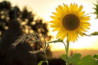 Summer Digital Art - Sunflower by Super Lovely