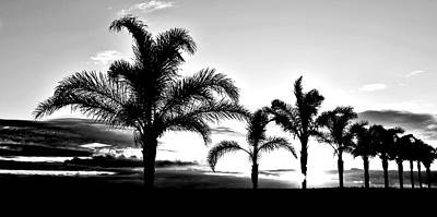 Photograph - Sunrise With Palm Trees by Werner Lehmann