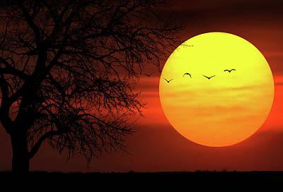 Canola Photograph - Sunset by Bess Hamiti