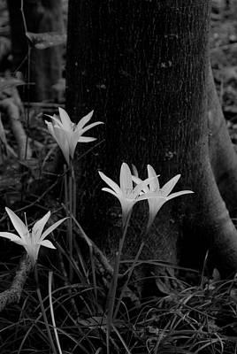 Swamp Lilies Art Print