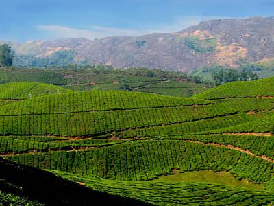 Tea Plantation Art Print by Art Spectrum